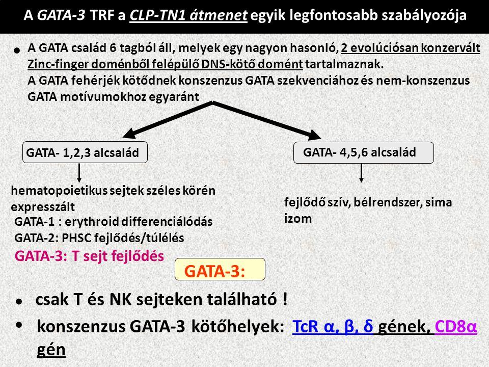 • • • GATA-3: csak T és NK sejteken található !