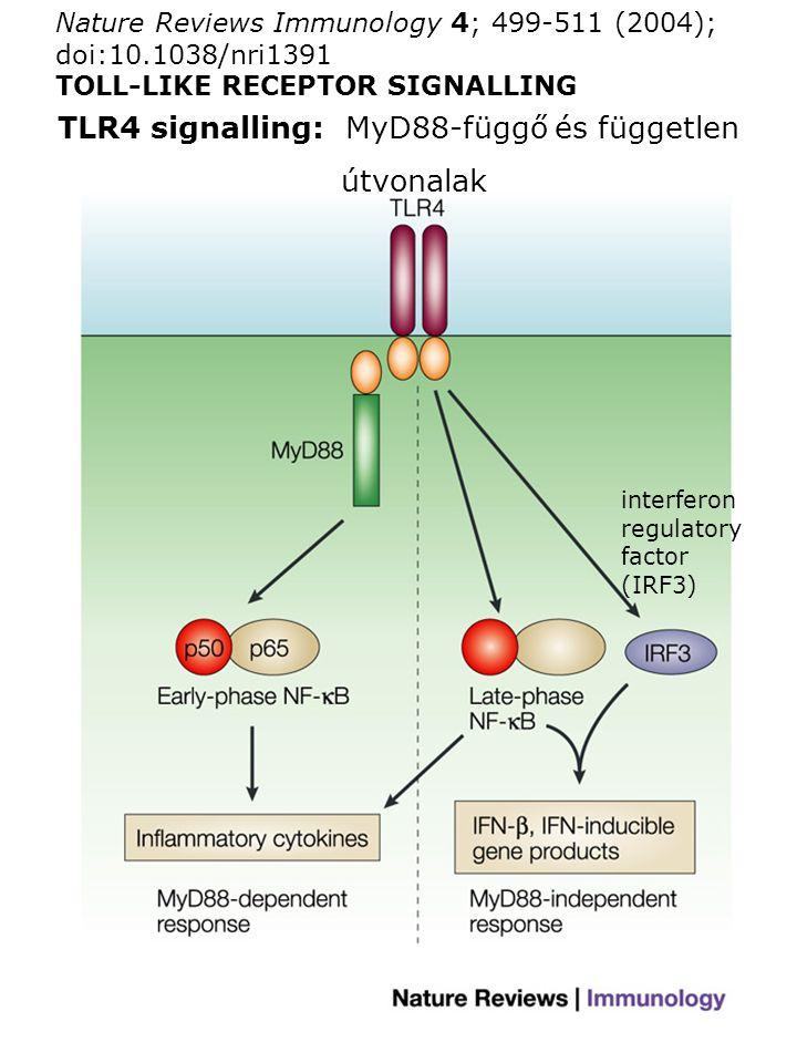TLR4 signalling: MyD88-függő és független