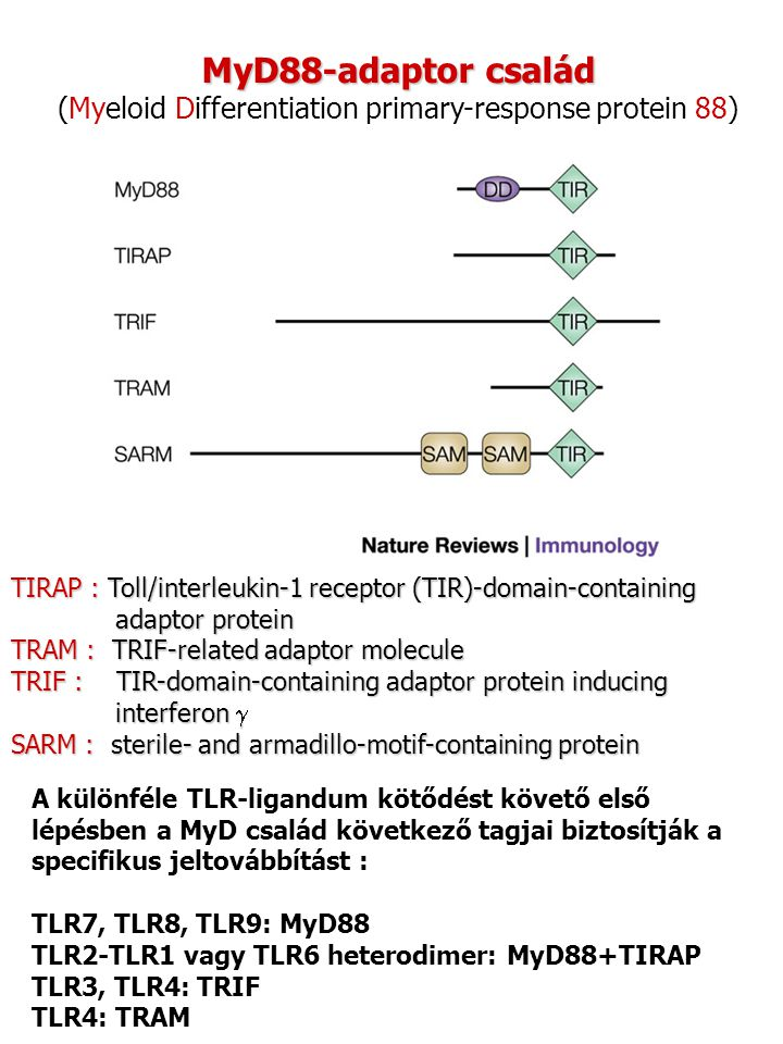 (Myeloid Differentiation primary-response protein 88)