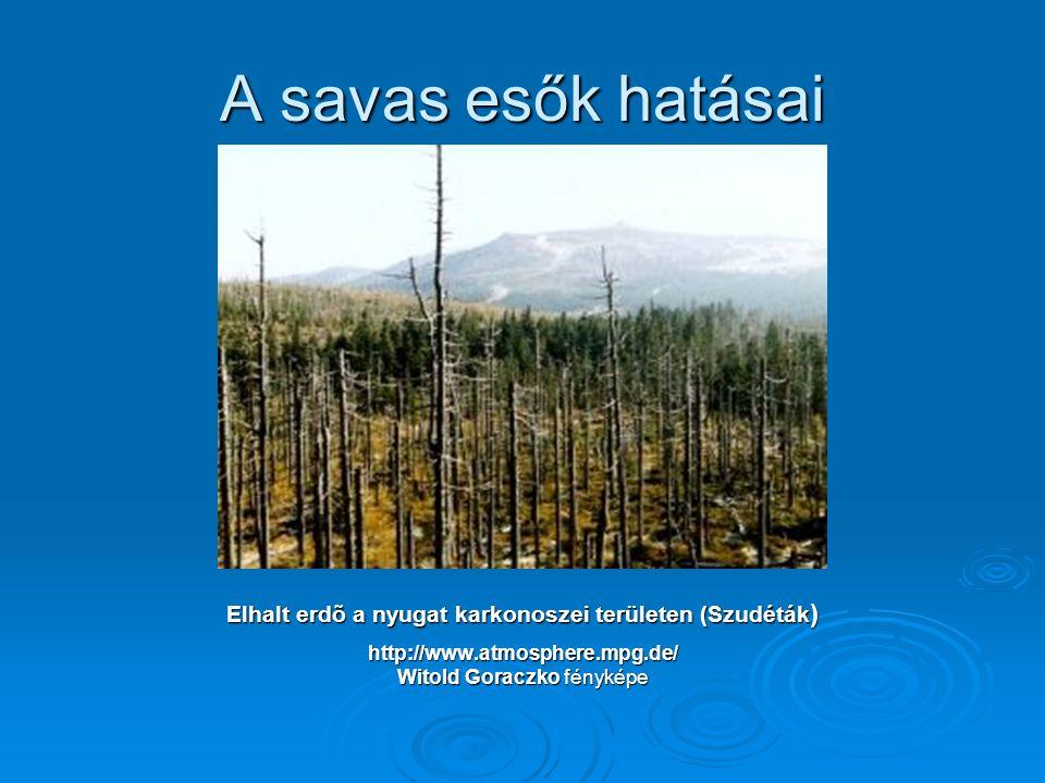 Elhalt erdõ a nyugat karkonoszei területen (Szudéták)