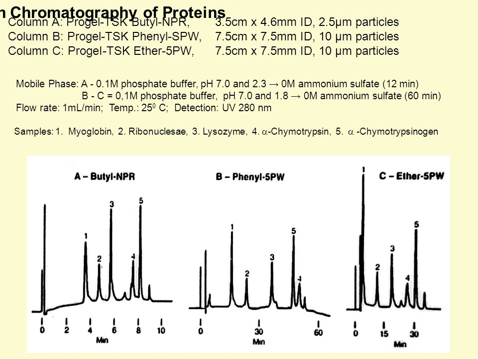 Hydrophobic Interaction Chromatography of Proteins