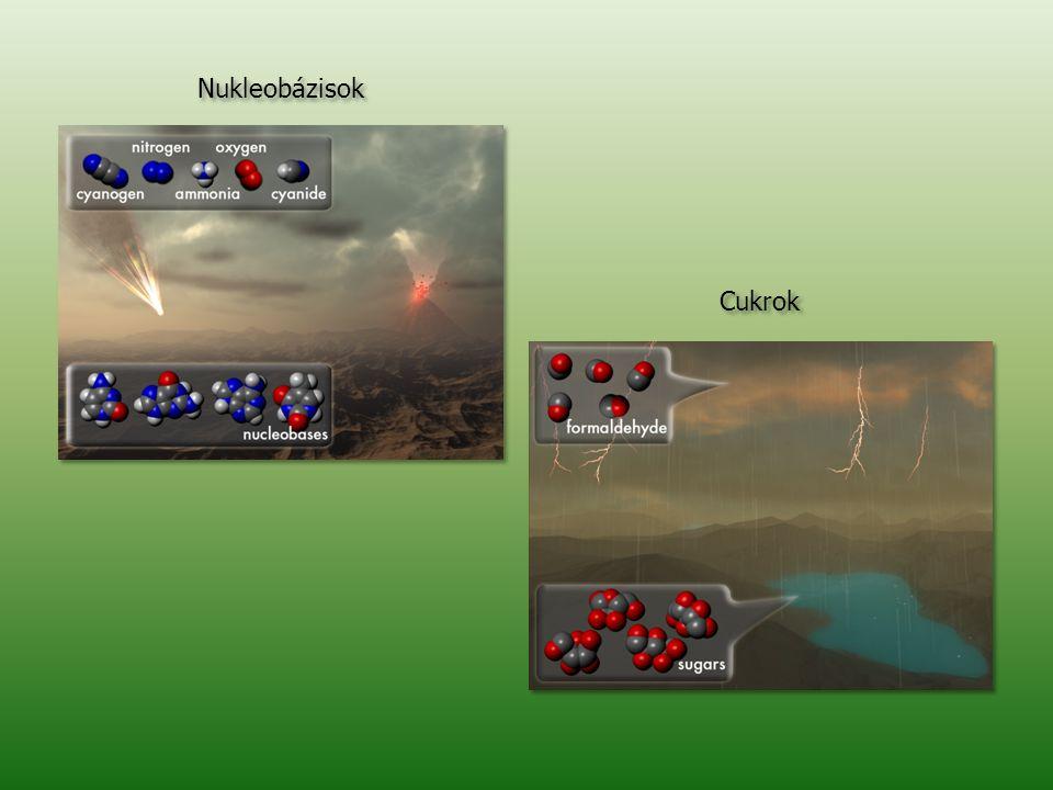 Nukleobázisok Cukrok