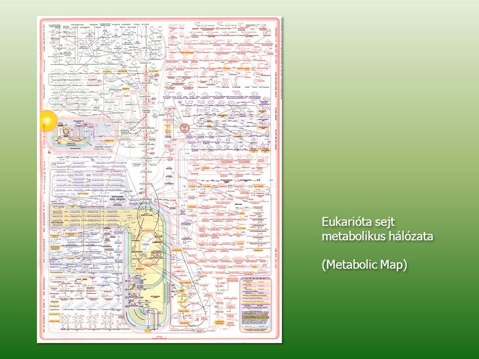 Eukarióta sejt metabolikus hálózata (Metabolic Map)