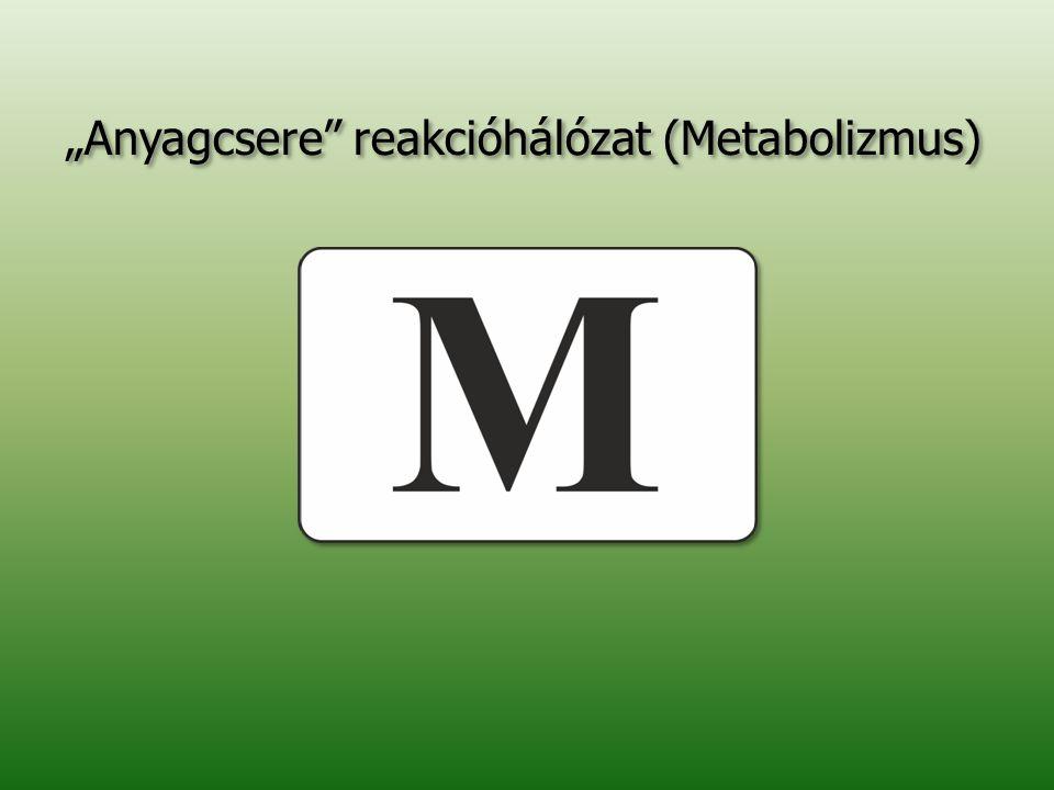 """""""Anyagcsere reakcióhálózat (Metabolizmus)"""