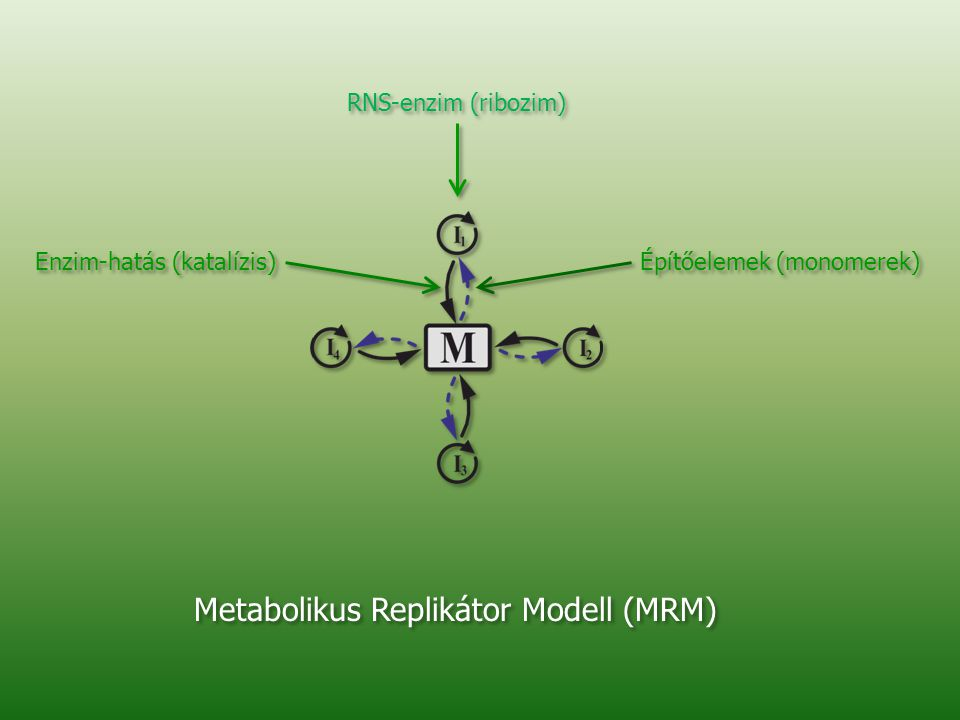 Metabolikus Replikátor Modell (MRM)
