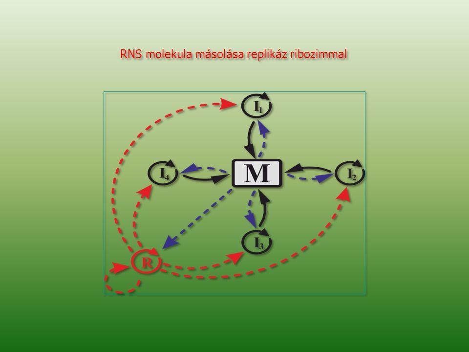 RNS molekula másolása replikáz ribozimmal