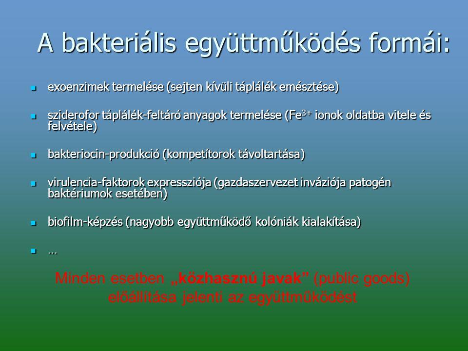 A bakteriális együttműködés formái: