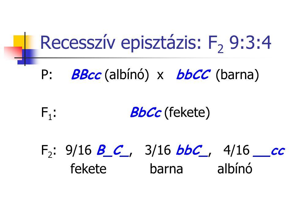 Recesszív episztázis: F2 9:3:4