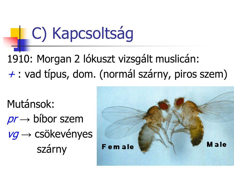 C) Kapcsoltság 1910: Morgan 2 lókuszt vizsgált muslicán: