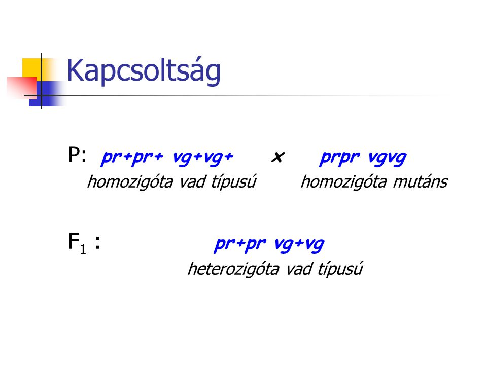 Kapcsoltság P: pr+pr+ vg+vg+ x prpr vgvg F1 : pr+pr vg+vg