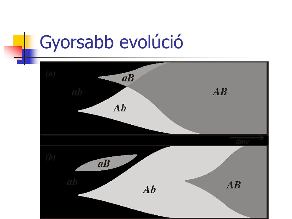 Gyorsabb evolúció