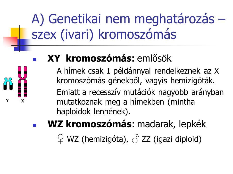 A) Genetikai nem meghatározás – szex (ivari) kromoszómás