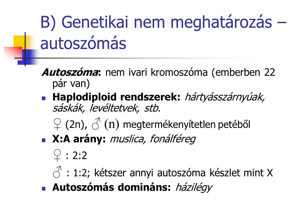 B) Genetikai nem meghatározás – autoszómás
