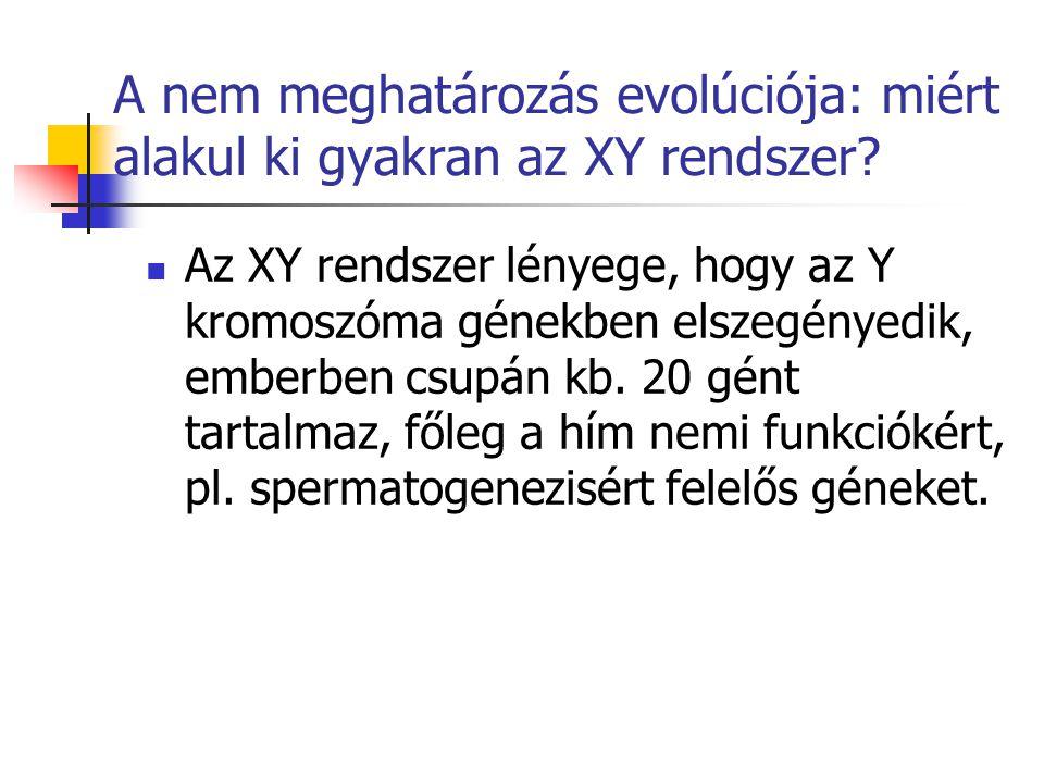 A nem meghatározás evolúciója: miért alakul ki gyakran az XY rendszer