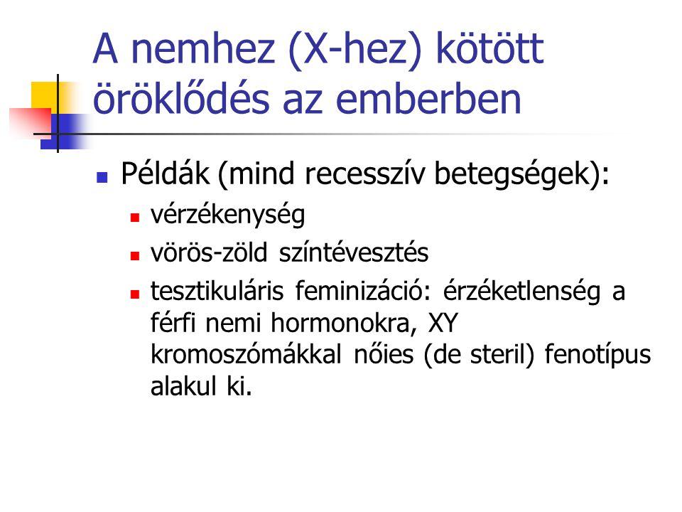 A nemhez (X-hez) kötött öröklődés az emberben