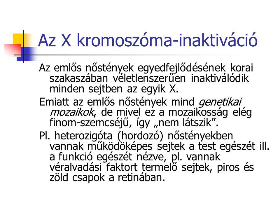 Az X kromoszóma-inaktiváció
