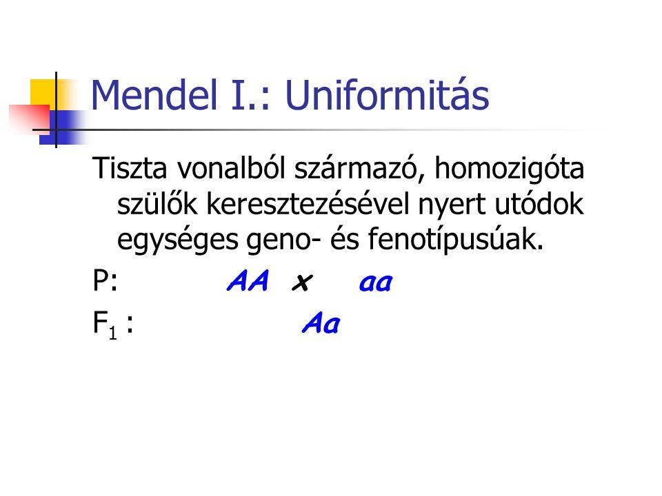 Mendel I.: Uniformitás Tiszta vonalból származó, homozigóta szülők keresztezésével nyert utódok egységes geno- és fenotípusúak.