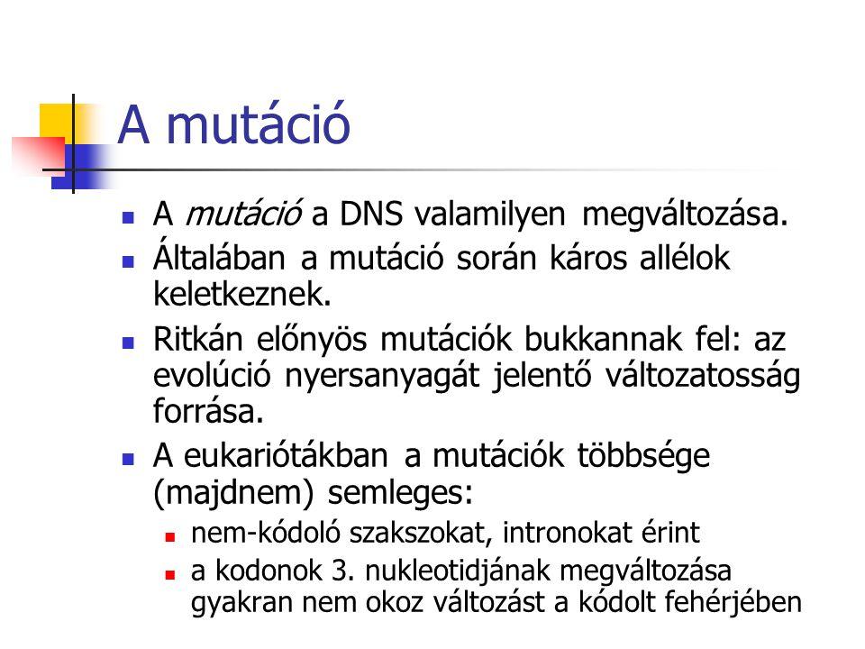 A mutáció A mutáció a DNS valamilyen megváltozása.