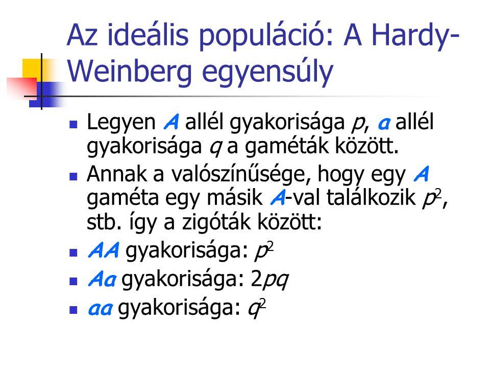 Az ideális populáció: A Hardy-Weinberg egyensúly