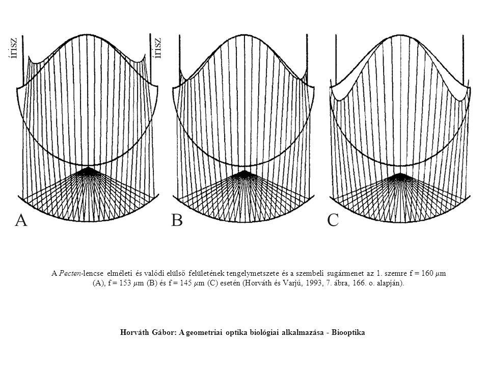 Horváth Gábor: A geometriai optika biológiai alkalmazása - Biooptika