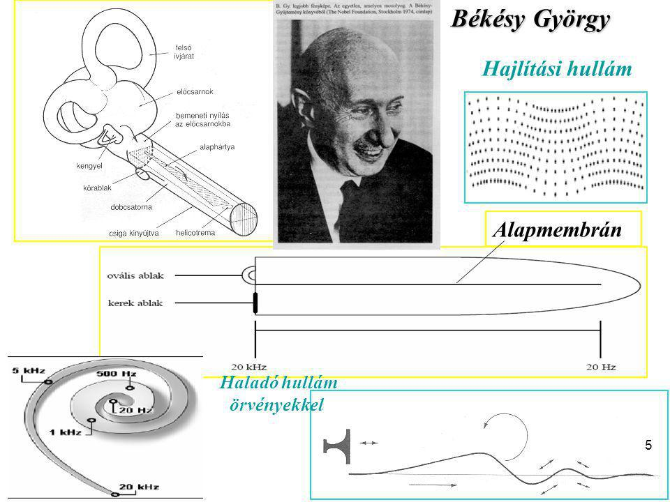 Békésy György Hajlítási hullám Alapmembrán Haladó hullám örvényekkel