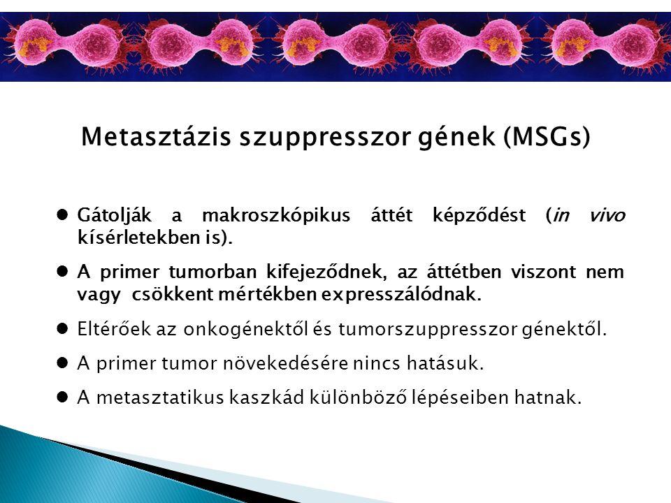 Metasztázis szuppresszor gének (MSGs)
