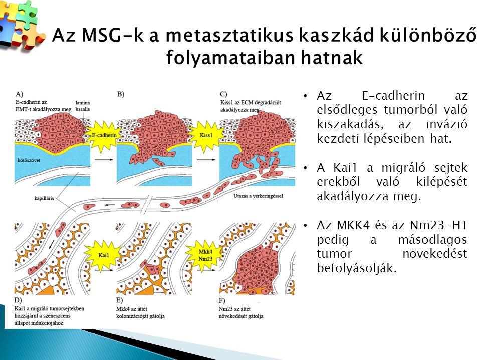 Az MSG-k a metasztatikus kaszkád különböző folyamataiban hatnak