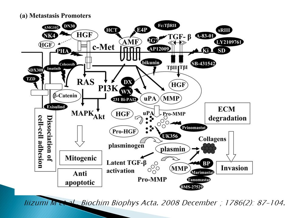Iiizumi M et al. , Biochim Biophys Acta
