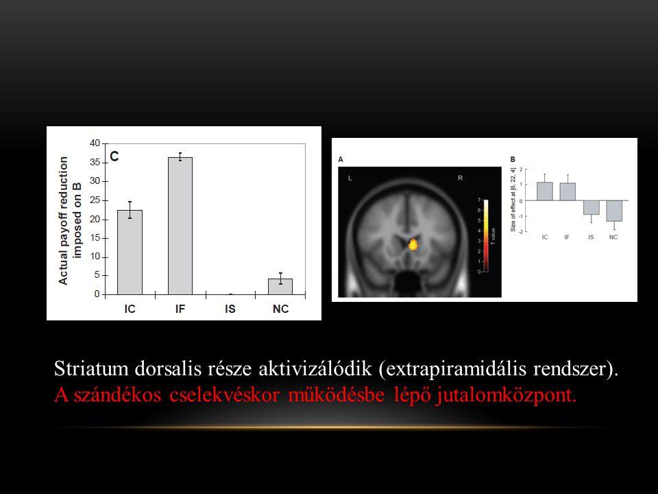 Striatum dorsalis része aktivizálódik (extrapiramidális rendszer).