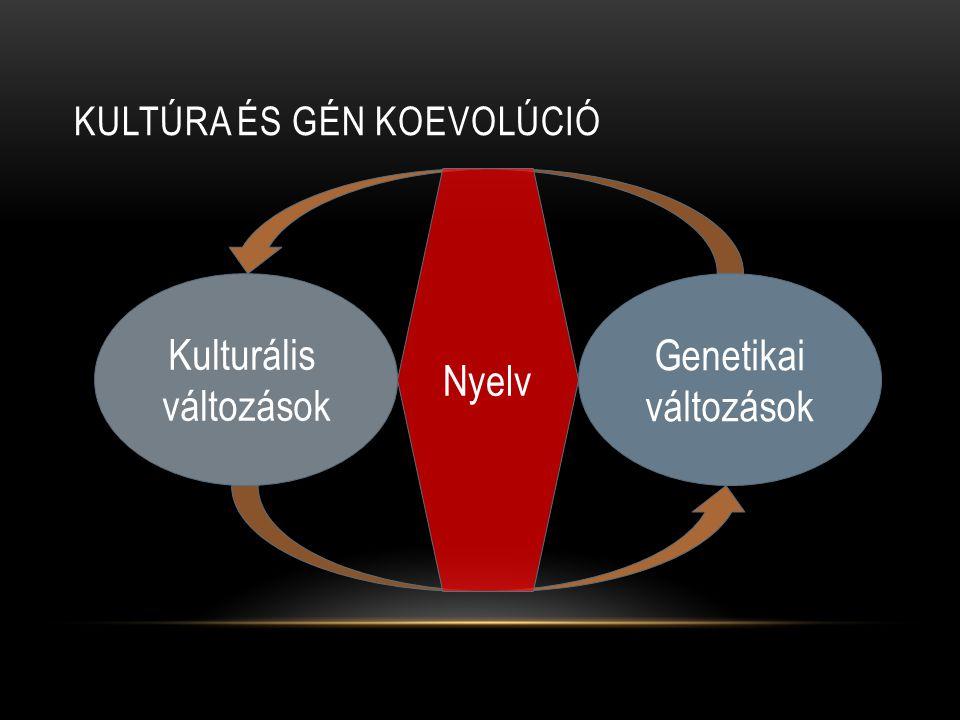 Kultúra és gén koevolúció