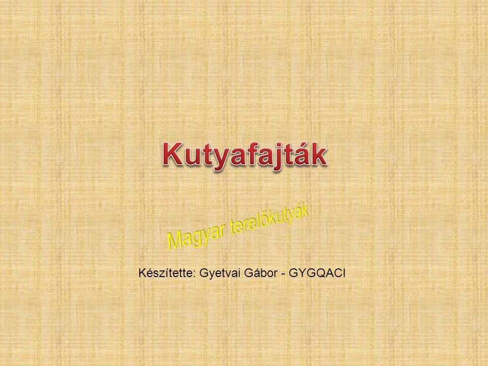 Kutyafajták Magyar terelőkutyák Készítette: Gyetvai Gábor - GYGQACI