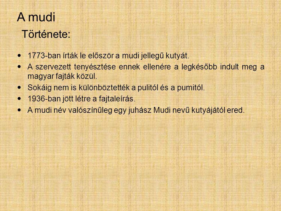 A mudi Története: 1773-ban írták le először a mudi jellegű kutyát.