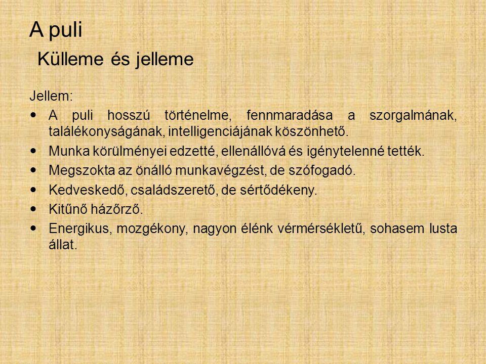 A puli Külleme és jelleme Jellem: