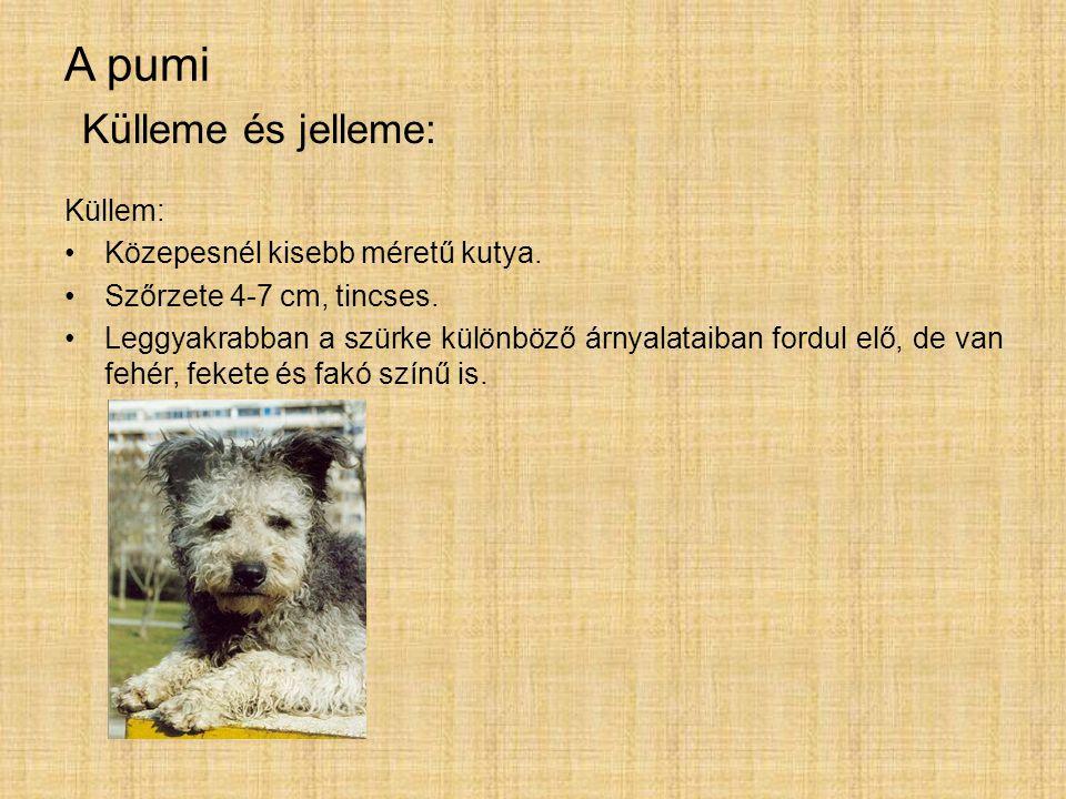 A pumi Külleme és jelleme: Küllem: Közepesnél kisebb méretű kutya.
