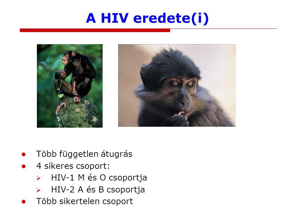 A HIV eredete(i) Több független átugrás 4 sikeres csoport: