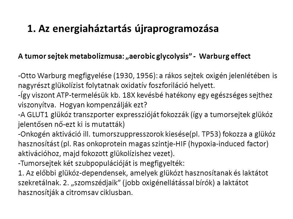 1. Az energiaháztartás újraprogramozása