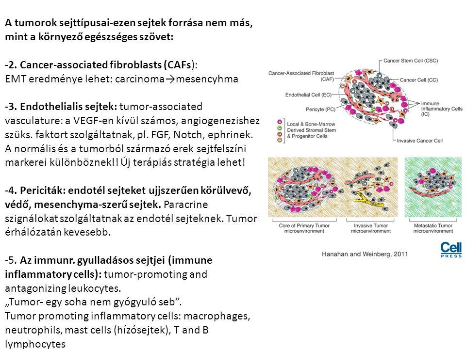 A tumorok sejttípusai-ezen sejtek forrása nem más, mint a környező egészséges szövet: