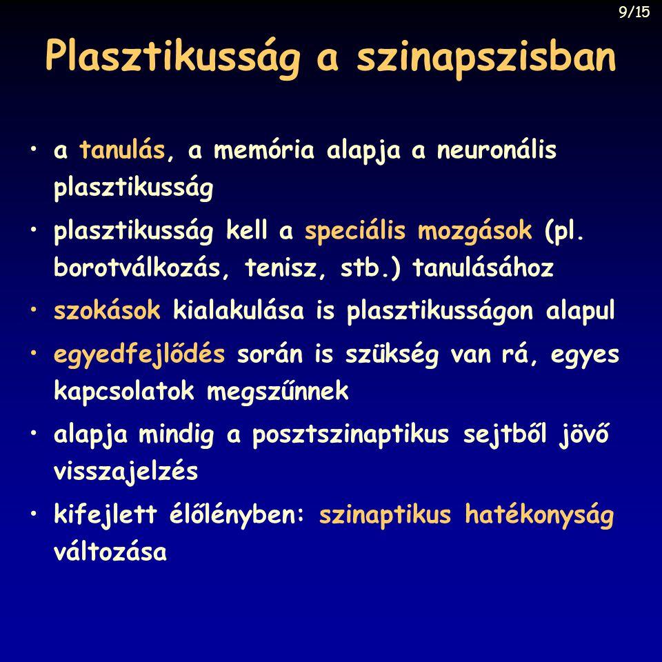 Plasztikusság a szinapszisban