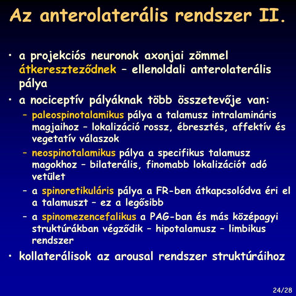 Az anterolaterális rendszer II.