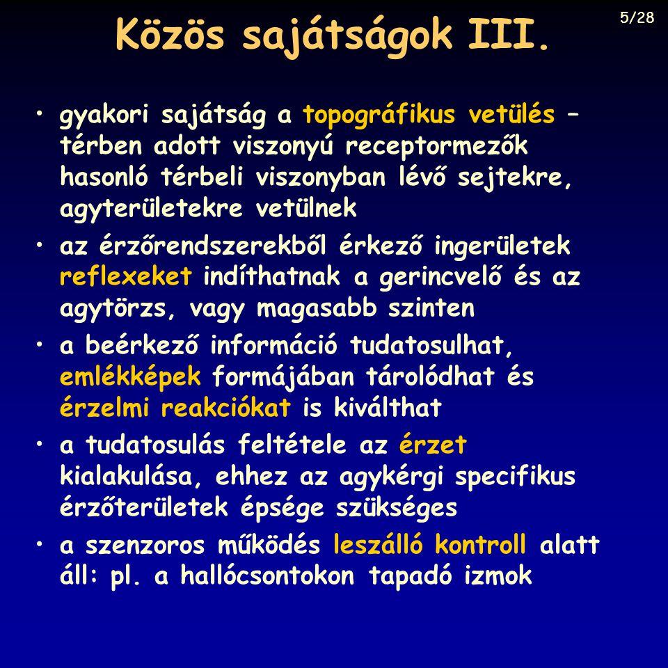 Közös sajátságok III. 5/28.