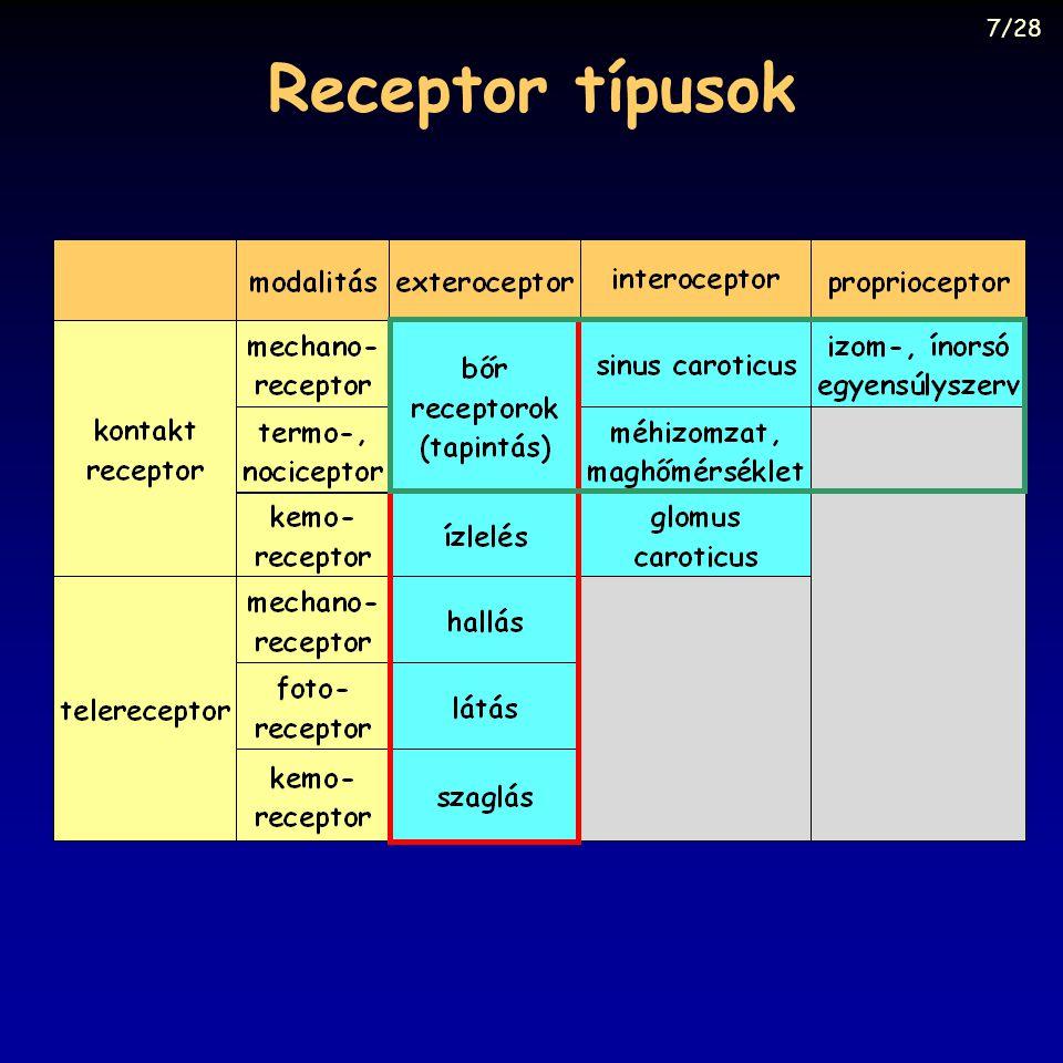 7/28 Receptor típusok