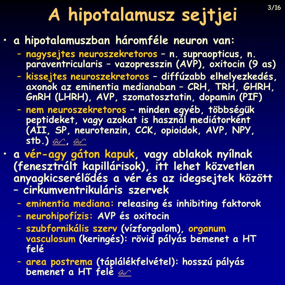 A hipotalamusz sejtjei