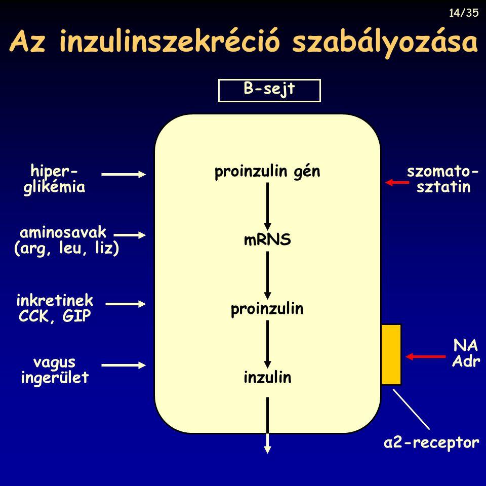 Az inzulinszekréció szabályozása