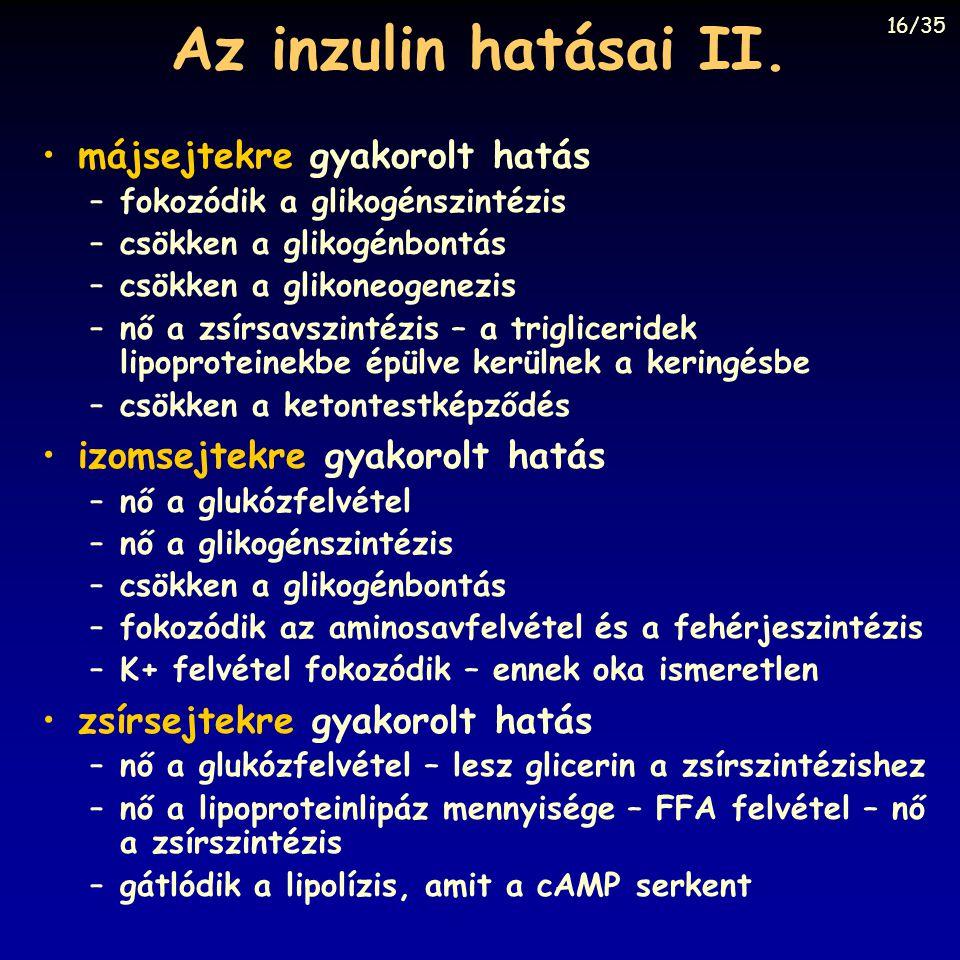 Az inzulin hatásai II. májsejtekre gyakorolt hatás