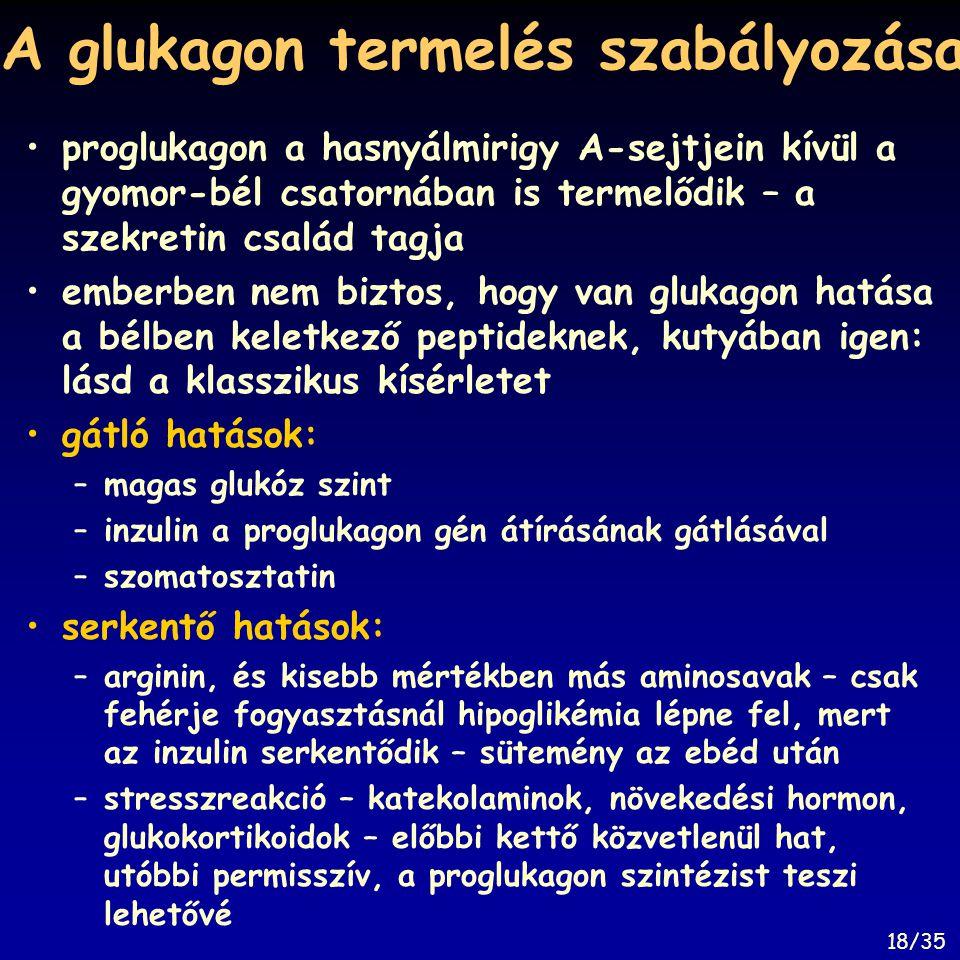 A glukagon termelés szabályozása