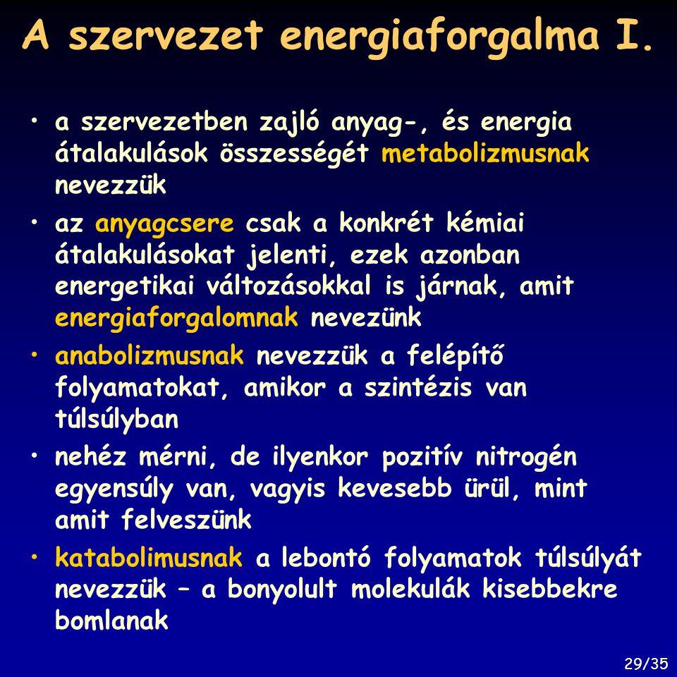 A szervezet energiaforgalma I.