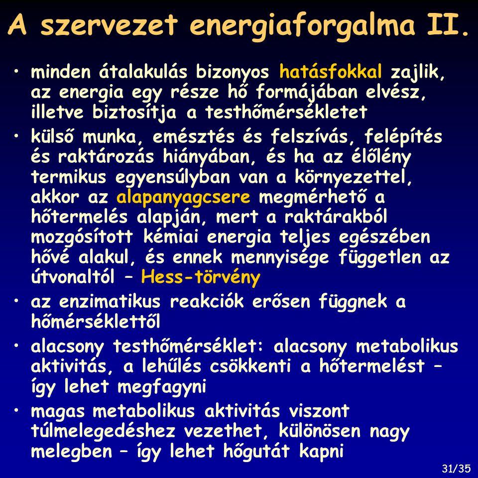 A szervezet energiaforgalma II.