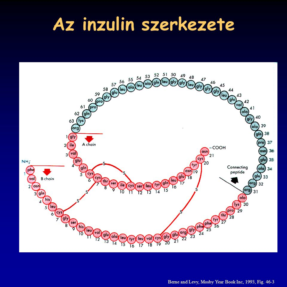 Az inzulin szerkezete Berne and Levy, Mosby Year Book Inc, 1993, Fig. 46-3