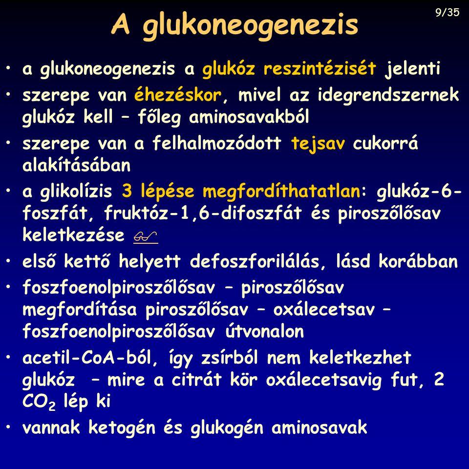 A glukoneogenezis a glukoneogenezis a glukóz reszintézisét jelenti