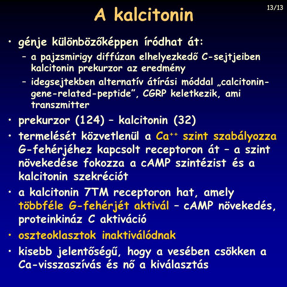 A kalcitonin génje különbözőképpen íródhat át:
